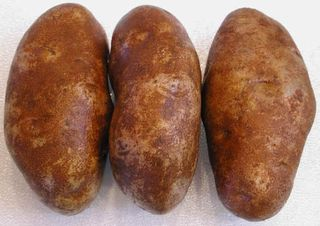 I-potatoes-rus