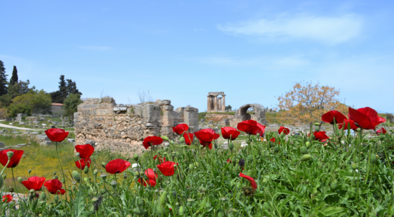 Poppies-Corinth Ruins